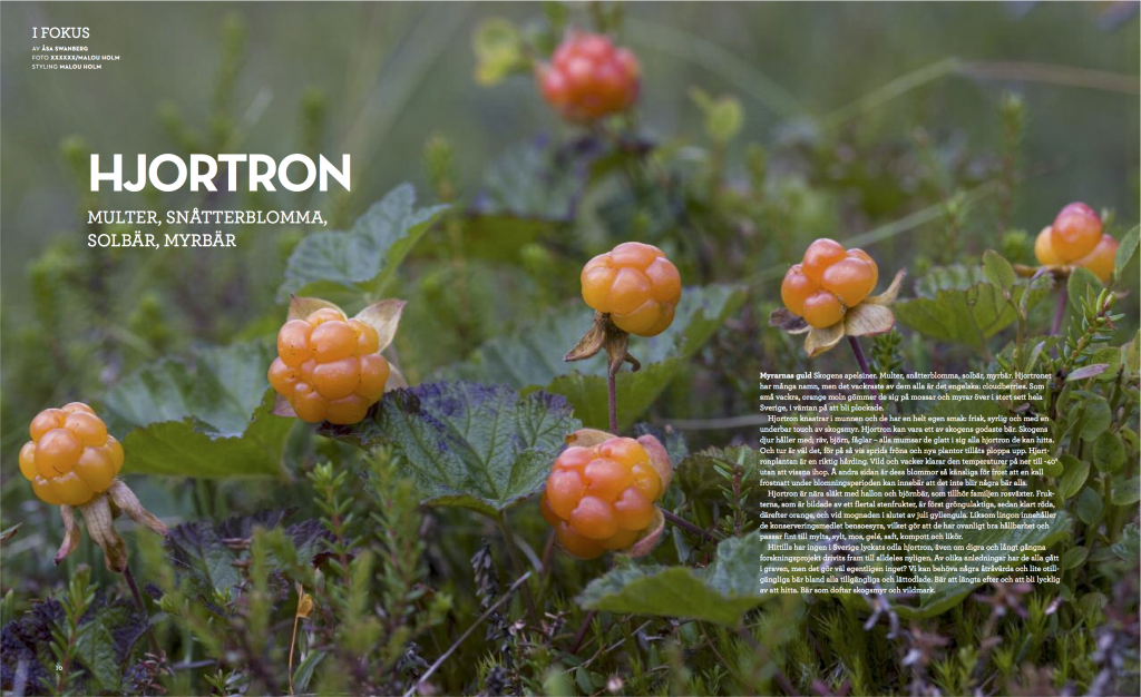 Hjortron1